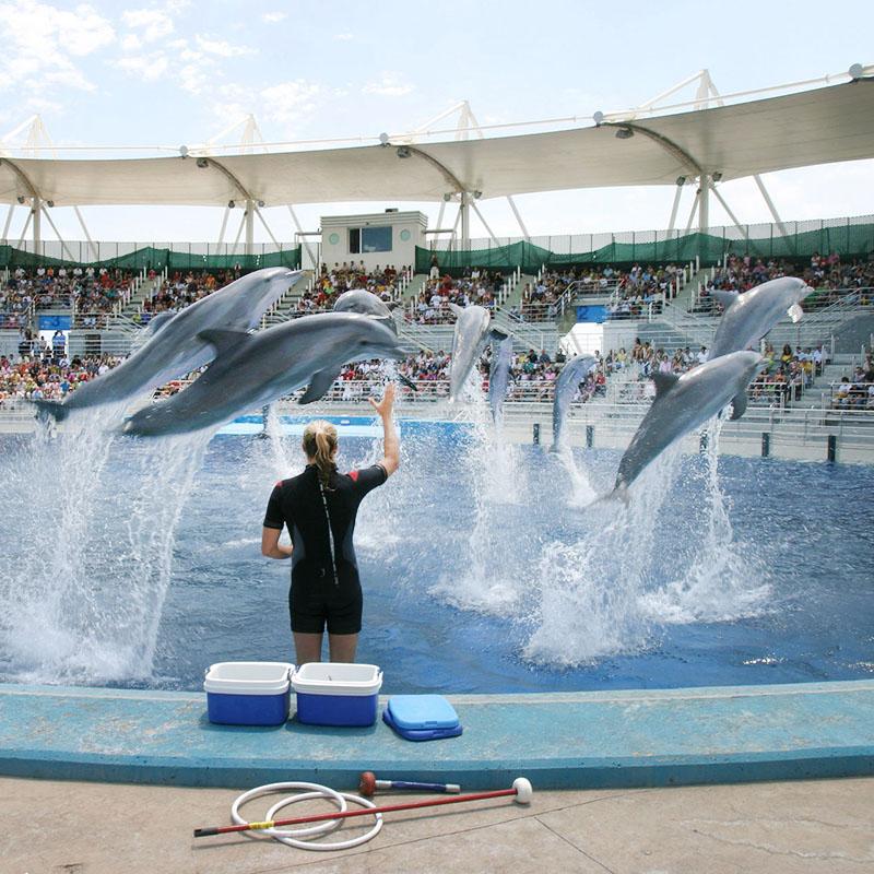 En France, de nombreux dauphins vivent dans des delphinariums.