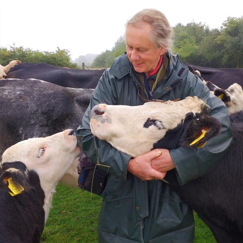 Jay a sauvé cette vache et son veau