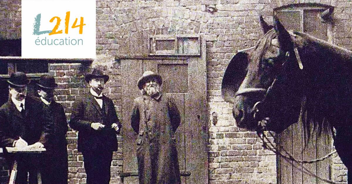 Hans le malin, un cheval génial !