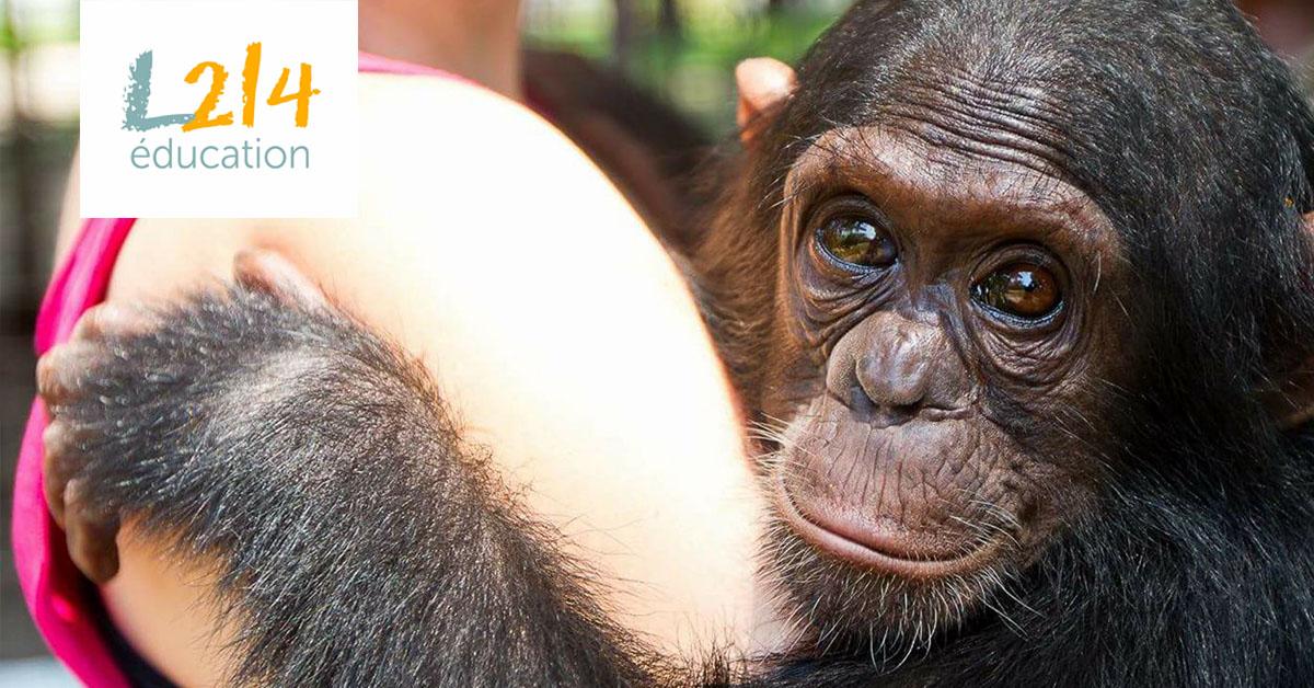 MÉTIER : Plus tard je voudrais être... primatologue