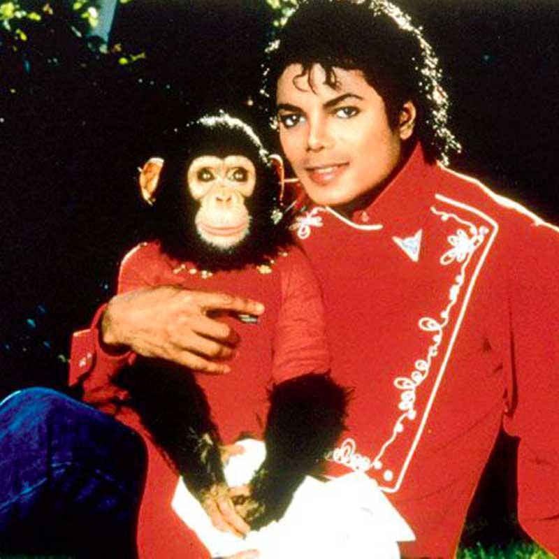 Bubbles est devenu célèbre car il était l'animal de compagnie de Michael Jackson.