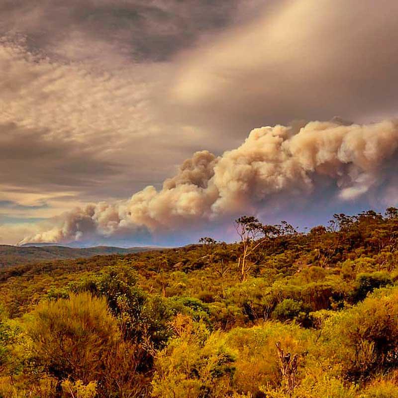 L'hiver dernier, les feux de brousse australiens auraient détruit 186 000 km2 de forêt.