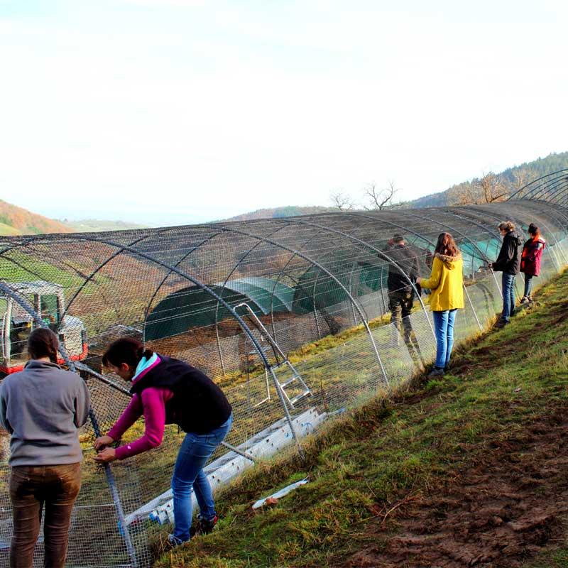 Des bénévoles aident à la construction d'une nouvelle volière.
