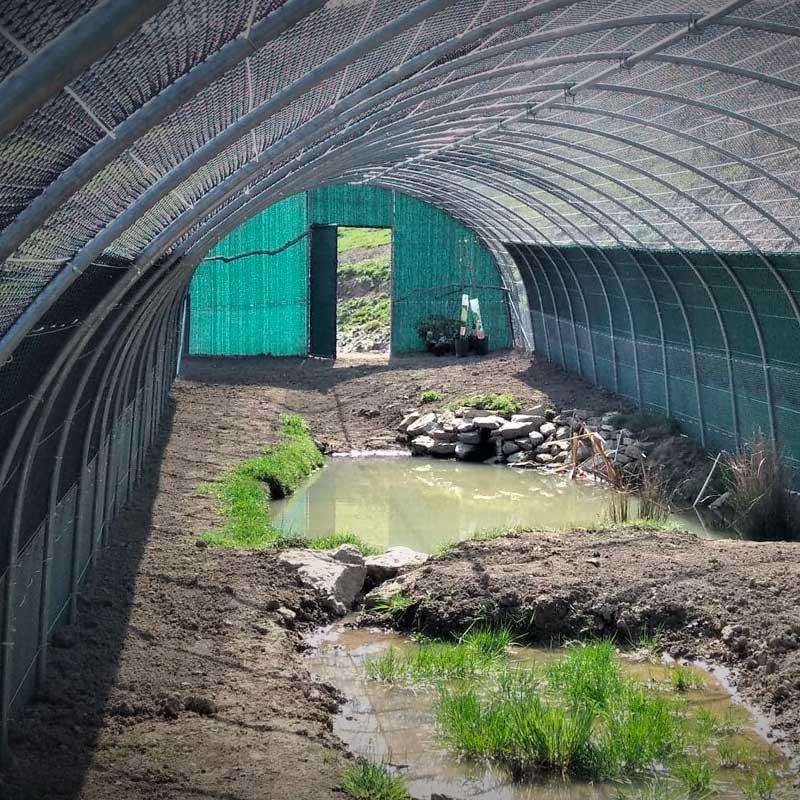 Cette volière, en cours d'aménagement, accueillera des oiseaux d'eau.
