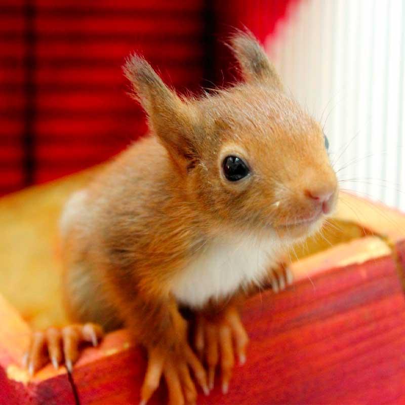 ...mais les mammifères, comme ce petit écureuil, sont aussi les bienvenus !
