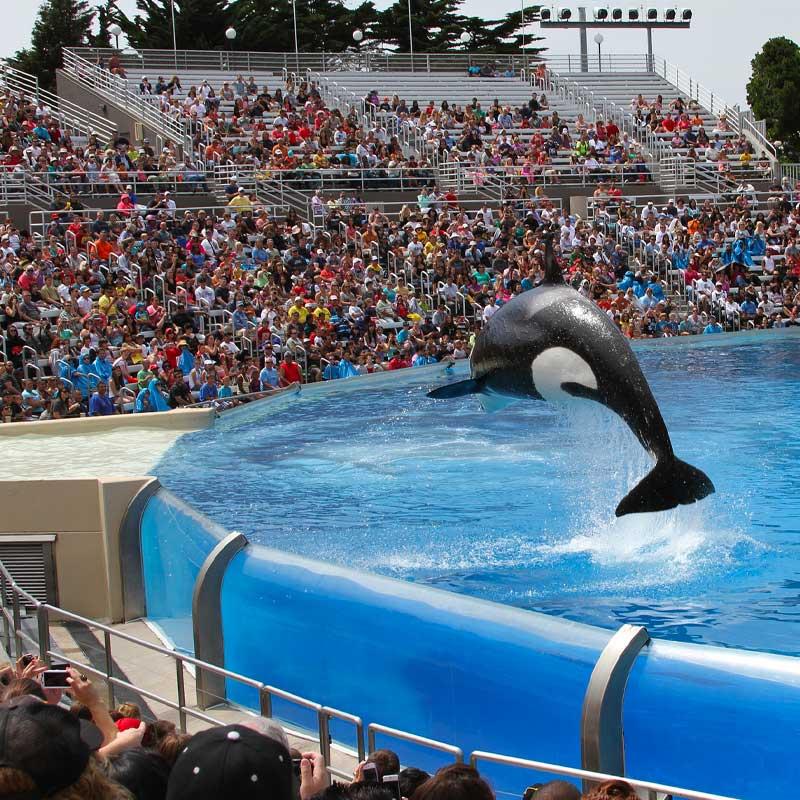 Aujourd'hui, John se bat contre la captivité des animaux marins.