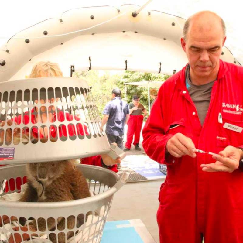 Dans l'hôpital de campagne de la SAVEM, tous les animaux sont soignés.