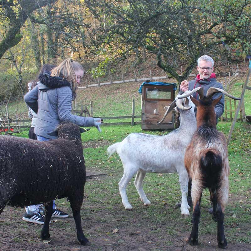 Les élèves rencontrent Ralph le mouton et Crocus le bouc !