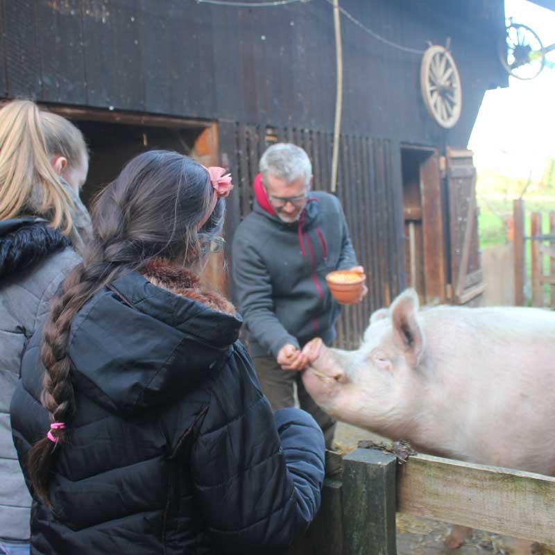 Henni le cochon est grognon : on reste derrière la barrière...