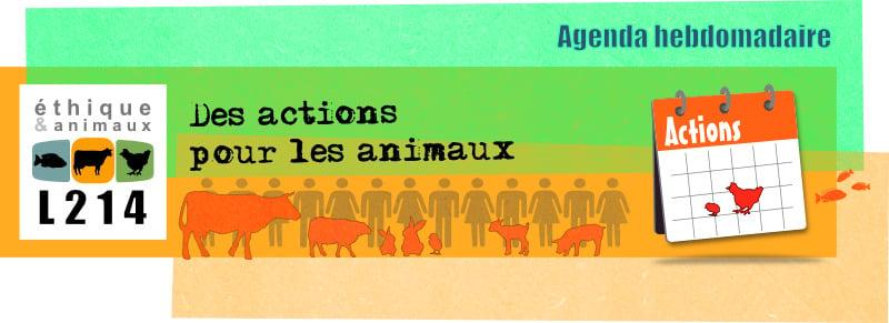 Agenda hebdo : actions pour les animaux