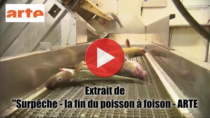 Vidéo : extrait de 'Surpêche - la fin du poisson à foison' - Arte