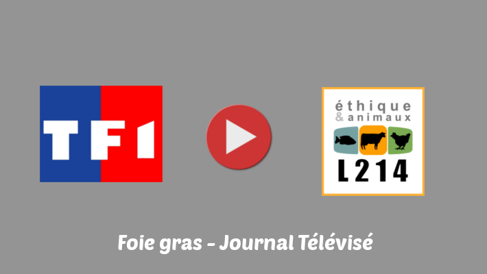 Interview de L214 dans le journal télévisé de 20 h sur TF1