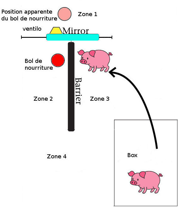 Schéma du test du miroir