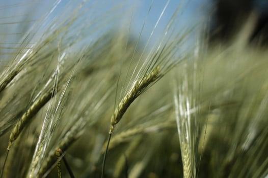 agriculture bio vegetalienne