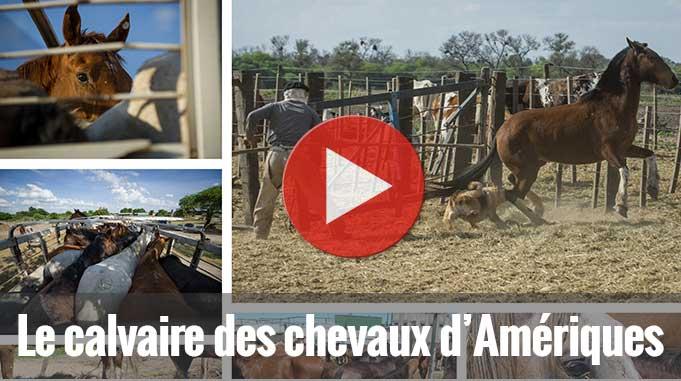Enquête Chevaux Amériques 2013 - TSB / AA USA / L214
