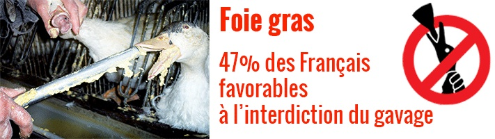47% des Français favorables à l'interdiction du foie gras