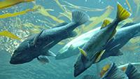 Les poissons sont des êtres sensibles