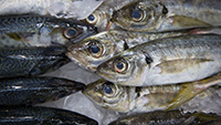 En savoir plus sur les poissons, la pêche, l'aquaculture