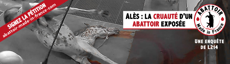 enquête abattoir Alès