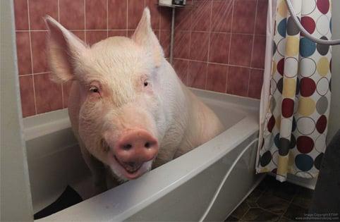 Esther sous la douche