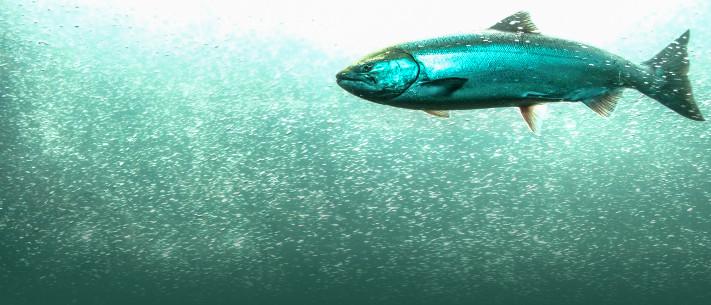 Sites de rencontre comme beaucoup de poissons