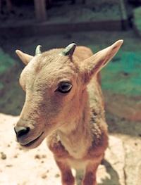Une donation  pour les animaux