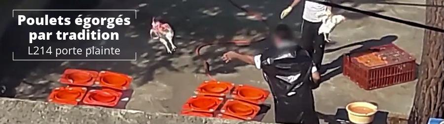 Maltraitance animale : vidéo et plainte contre le rituel juif Kapparot