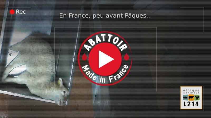 Abattoir Mauléon-Licharre