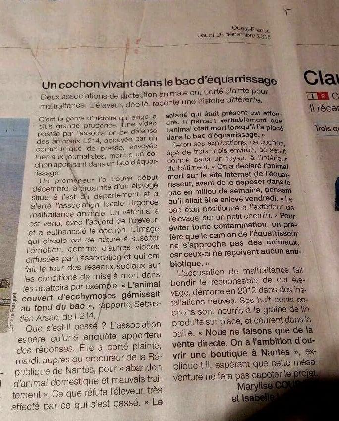 Coupure de presse Ouest France Un cochon vivant dans le bac d'équarissage