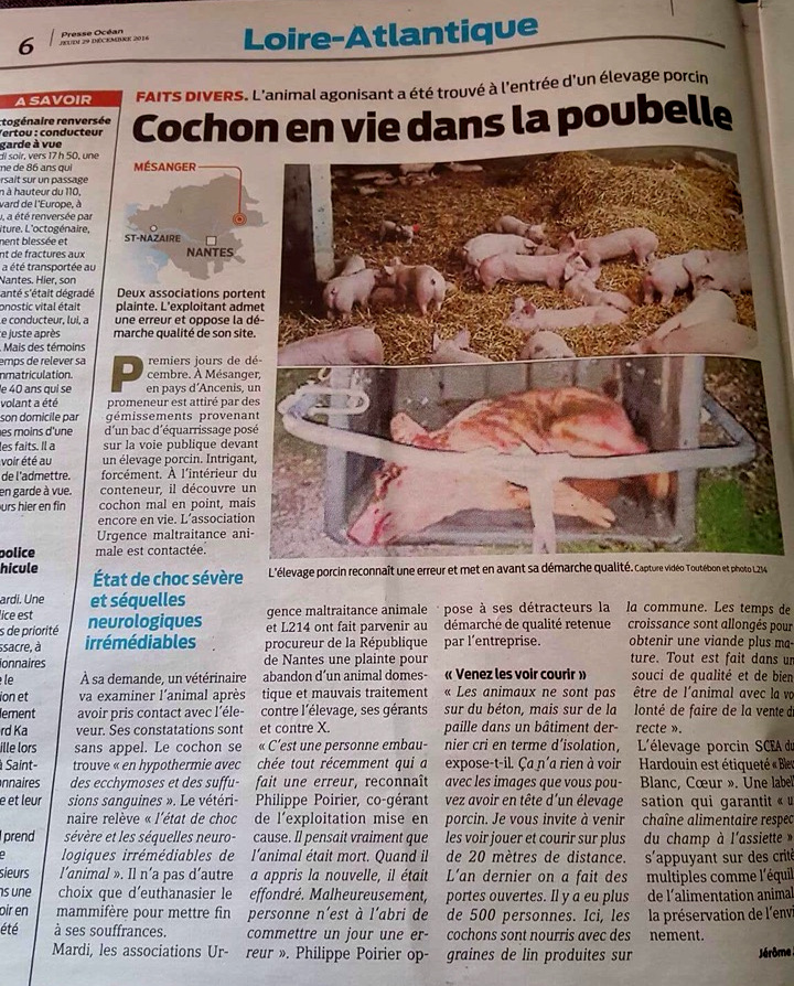 Presse Océan / Cochon en vie dans la poubelle
