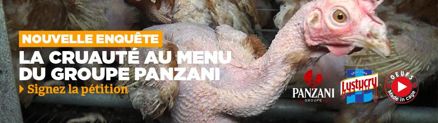 Nouvelle enquête de L214. Elevage en cage d'un fournisseur de la marque Lustrucru Sélection du groupe Panzani