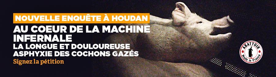 les cochons gazés à l'abattoir de Houdan