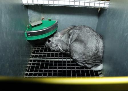 Poules entassées – Enquête de L214 dans un élevage de lapins Oryalg.