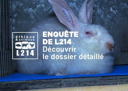 Rapport lapins Orylag – Enquête de L214 dans un élevage de lapins Oryalg.