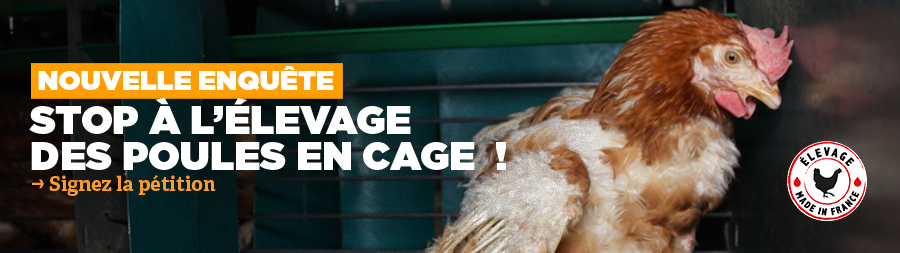 Stop Cages