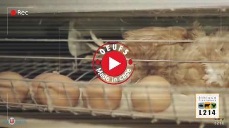 Stop à l'élevage des poules en cage!