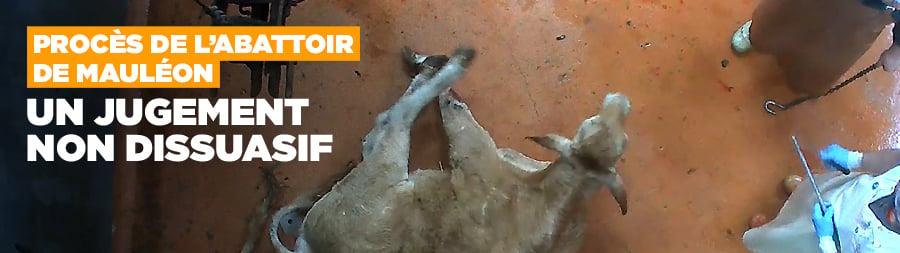 Procès de l'abattoir de Mauléon