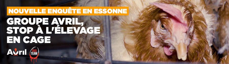 Cages : nouvelle enquête