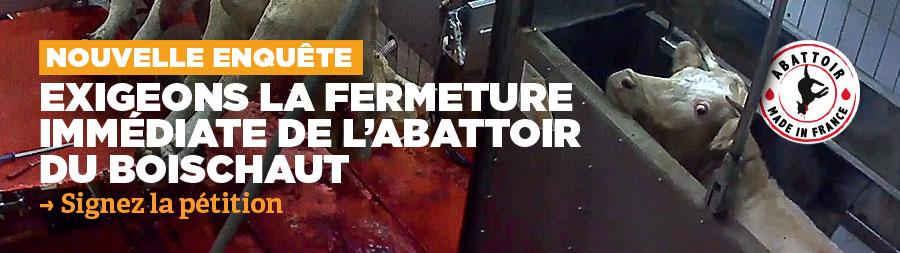 Abattoir : nouvelle enquête