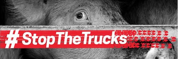 Stop aux longs transports d'animaux