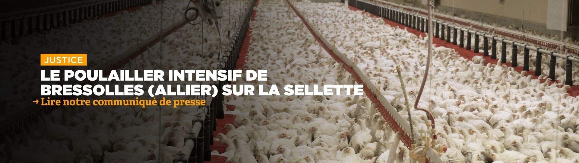 Poulailler de Bressolles : le rapporteur public défavorable au projet