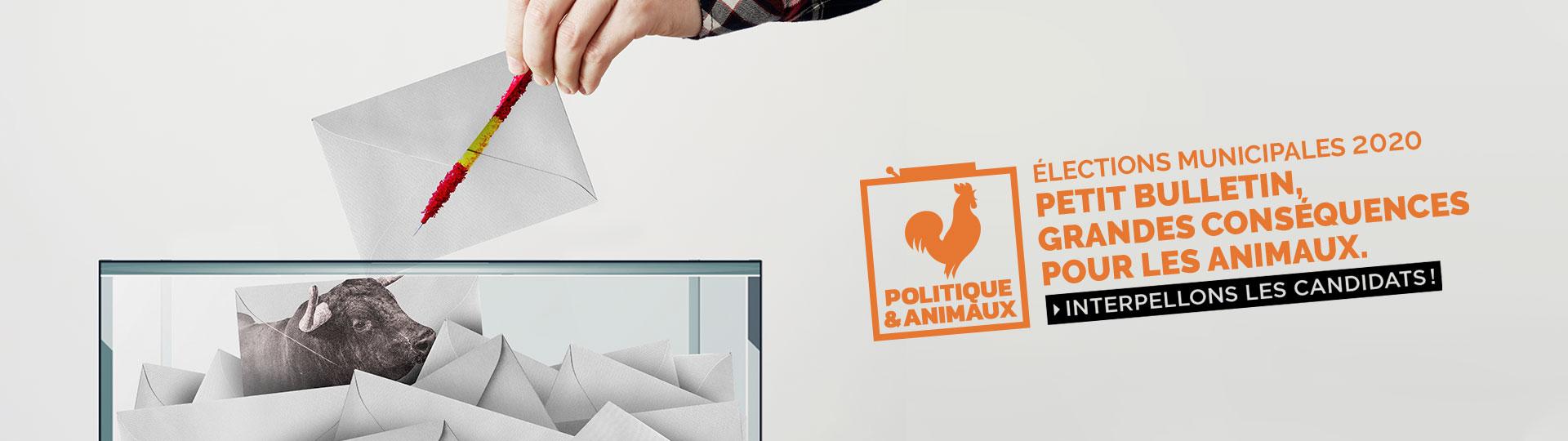 Actions pour les élections municipales