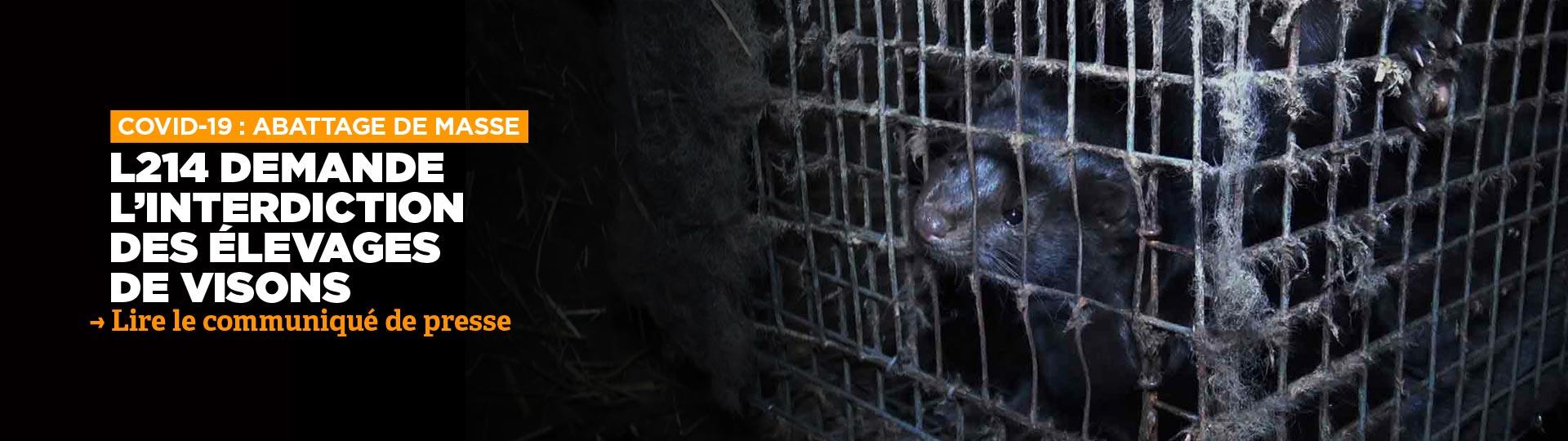L214 demande l'interdiction immédiate de l'élevage de visons