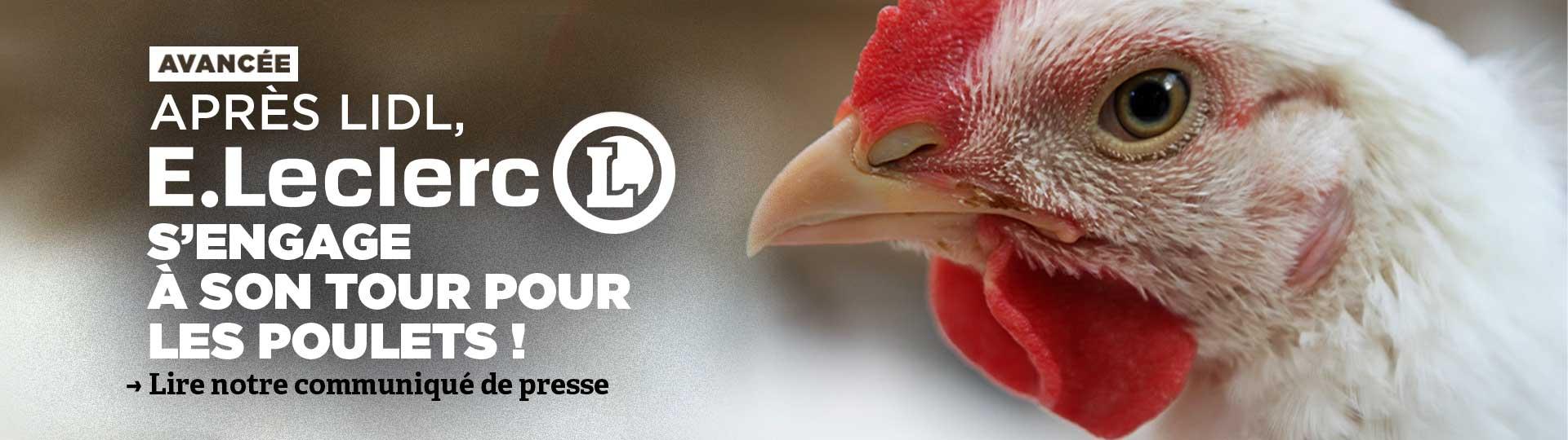 Leclerc s'engage pour les poulets !