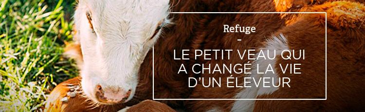 Bannière Le petit veau qui a changé la vie d'un éleveur