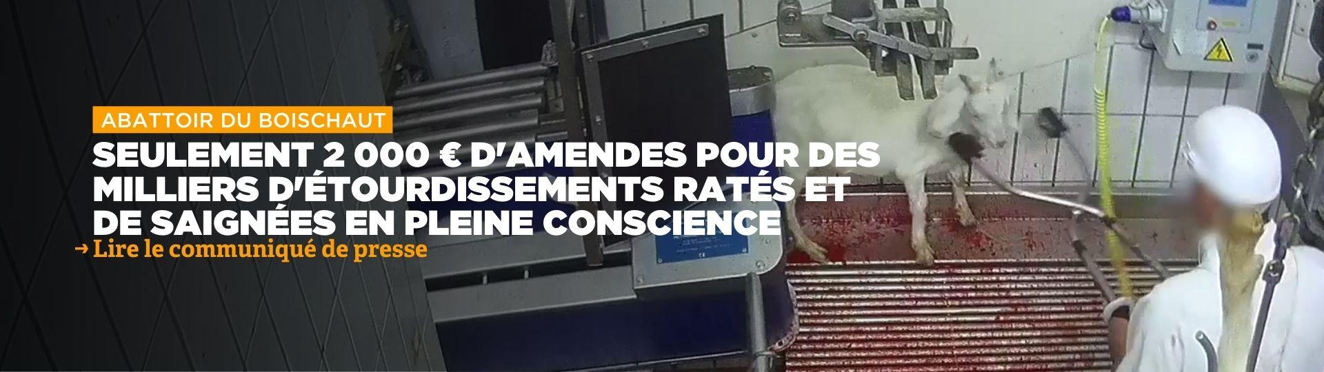 Abattoir du Boischaut : 2 000 € d'amendes seulement pour des milliers d'étourdissements ratés