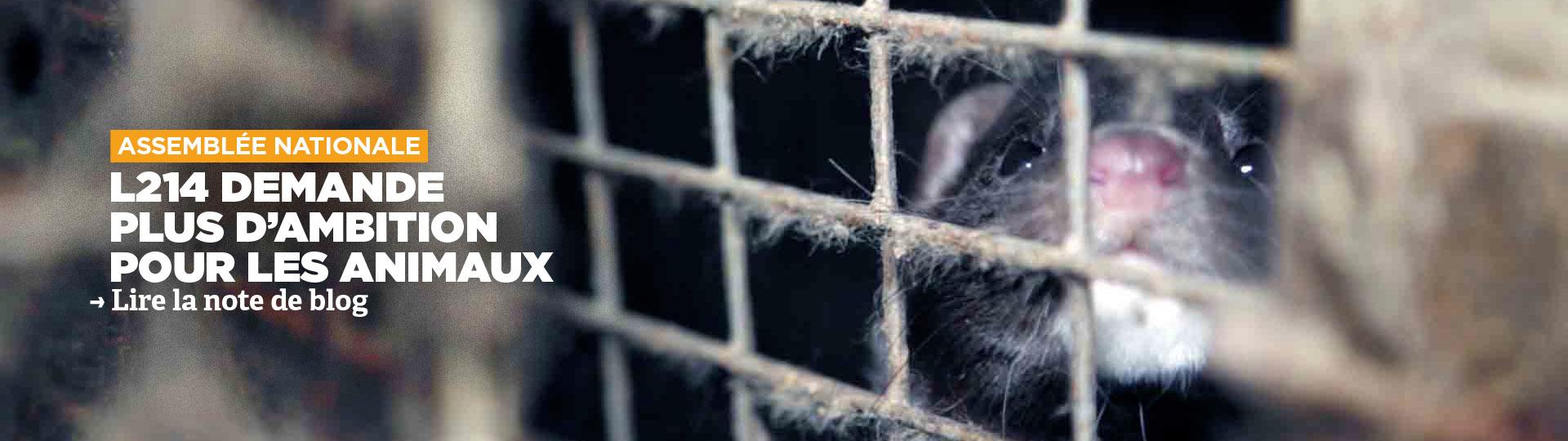 PPL Maltraitance animale
