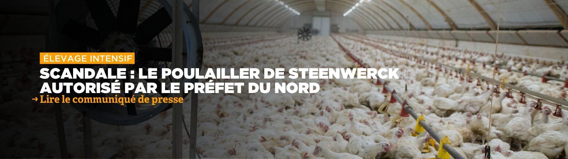 Nord : le préfet autorise la construction d'un élevage intensif de poulets