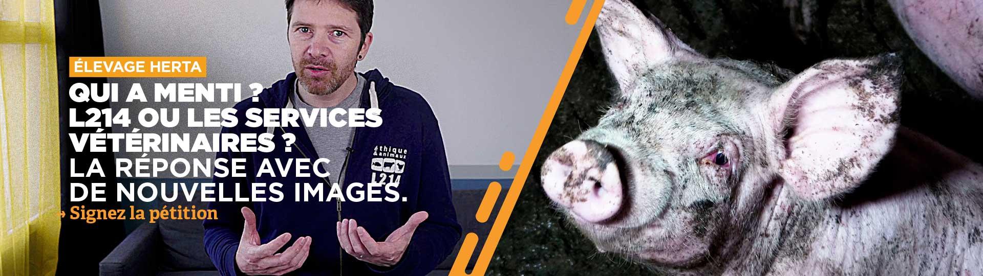 Élevage Herta : les mensonges des services vétérinaires de la préfecture de l'Allier