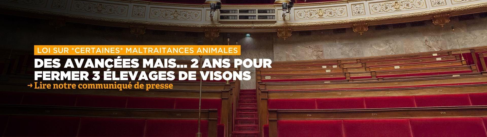 Loi Maltraitance animale : 2 ans pour fermer 3 élevages de visons...